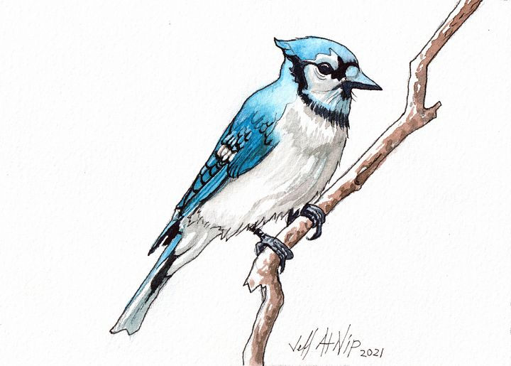 Blue Jay - Jeff Atnip Art