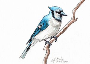 Blue Jay - Jeff Atnip Art