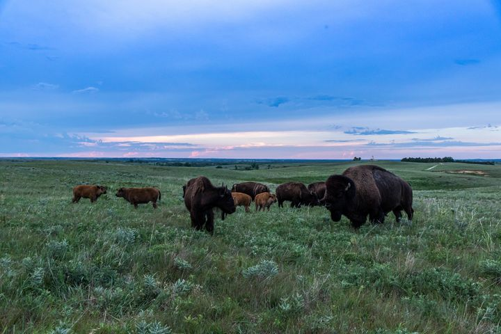 Home on the Range - Stockhaus Photography