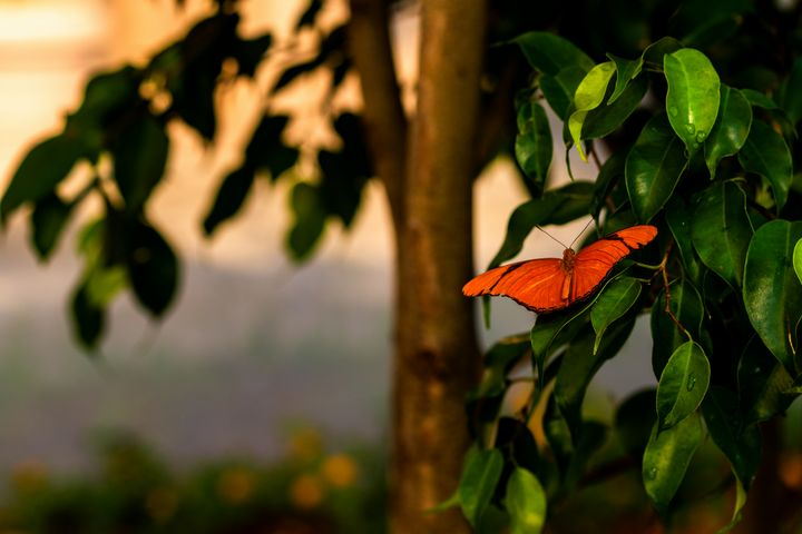 Butterfly - Stockhaus Photography