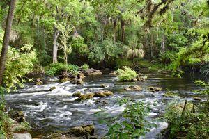 Florida Rapids