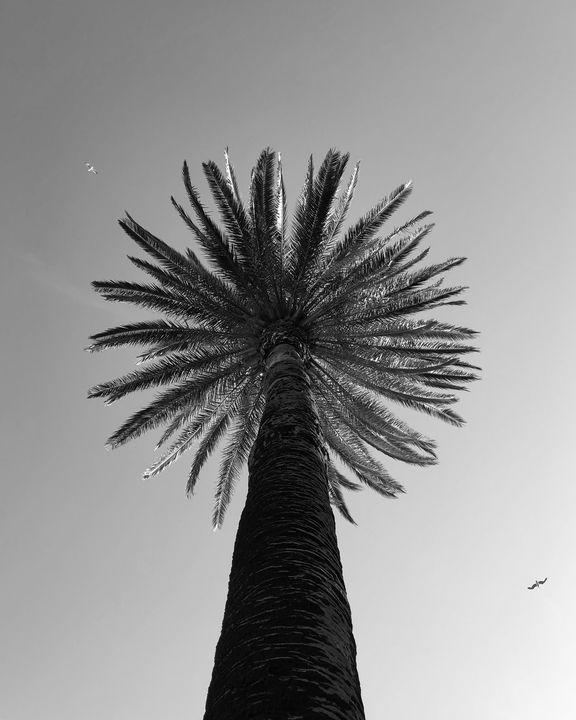 Palm Sun Day - Monsieur Bouvier