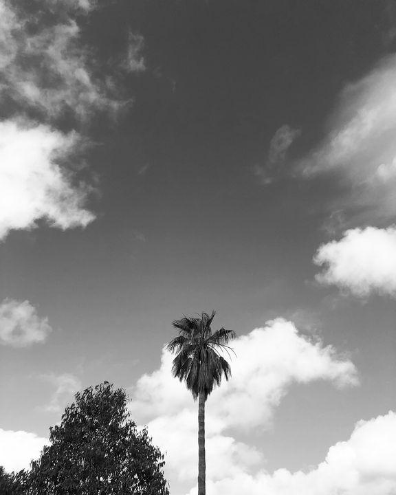 Treetops - Monsieur Bouvier