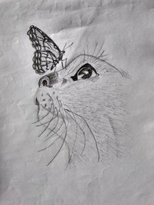 Cat And Butterfly Pencil Art