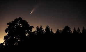 Comet NEOWISE over the trees