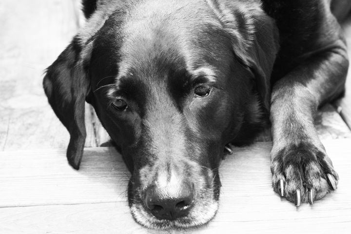 Thoughtful - Philosophy of Dog