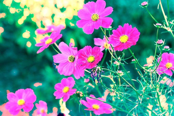 Cerise Cornflowers In The Field - Diana Abrahamson Art Studio