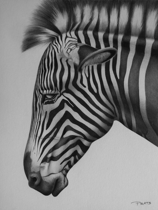 Zebra - Traditional Drawings