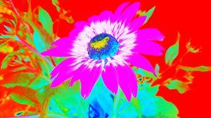 Daisy 2 - Jana ART