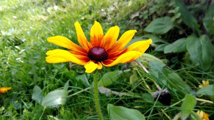 yellow flower - Jana ART
