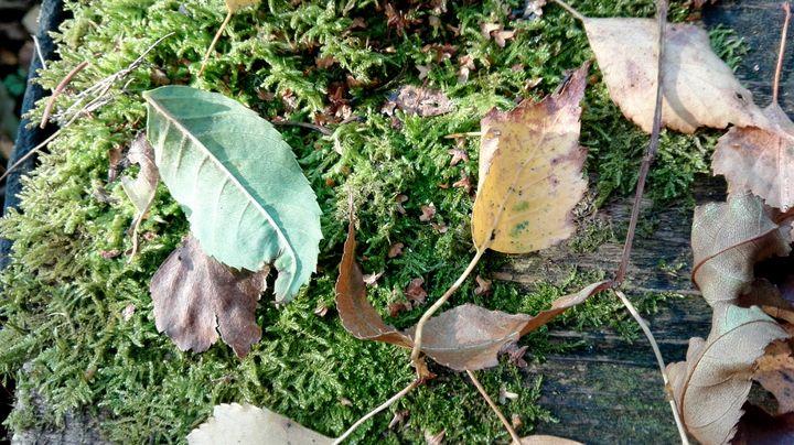 fallen leaves - Jana ART