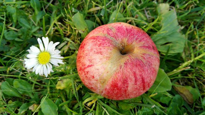 apple and flower 1 - Jana ART