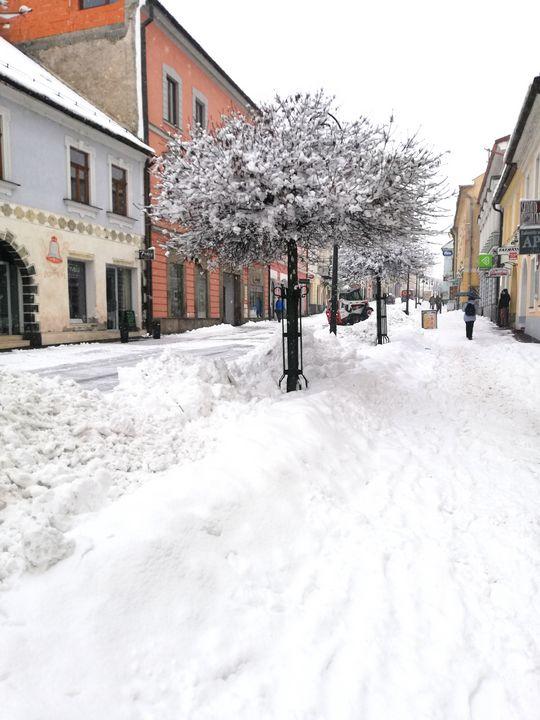 Tree in winter - Jana ART