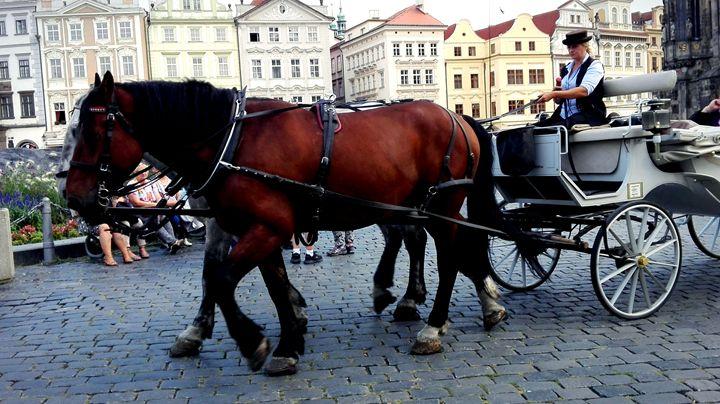 horses - Jana ART