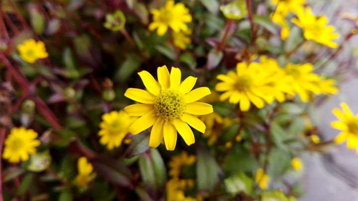 yellow flowers - Jana ART