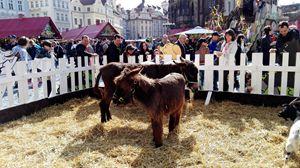 donkeys - Jana ART
