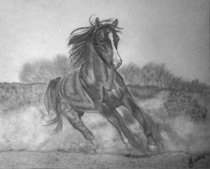 Arabian Horse Original Drawing