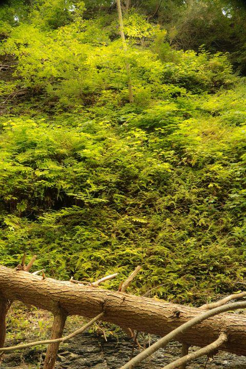 Forest Green - Artist Jeremy Bach