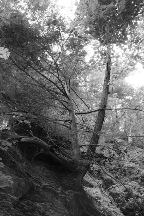 Lone tree - Artist Jeremy Bach