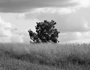Alone - Artist Jeremy Bach