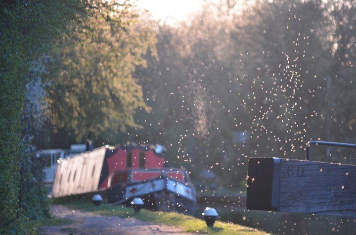 Canal Gnats - AmuseboucheUK