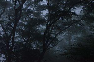 7 am Fog