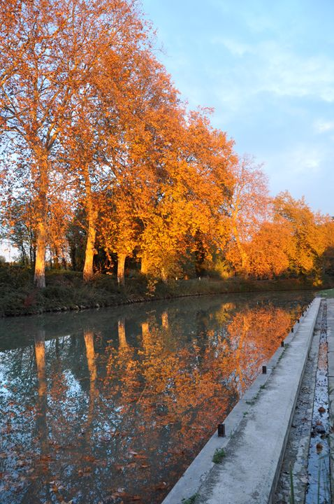 Plane trees in autumn colours - Leigh Rowland