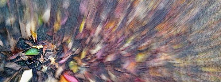 Autumn Colours I - D