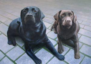 Pet portrait - dog #027