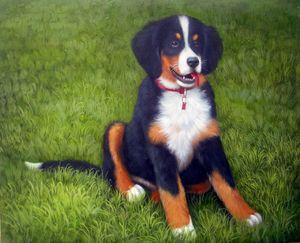 Pet portrait - dog #030
