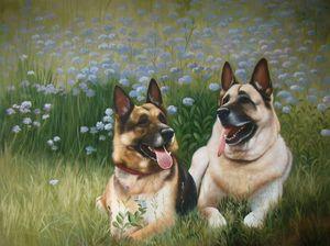 Pet portrait - dog #031