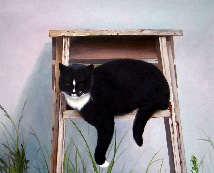 Pet portrait - cat sample 011 - Richard Zheng