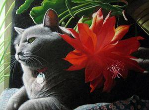 Pet portrait - cat sample 012