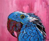 Animal parrot