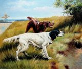 Animal hunting dog
