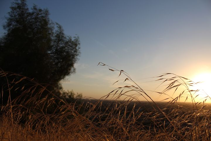 sunset - Graceful Creations