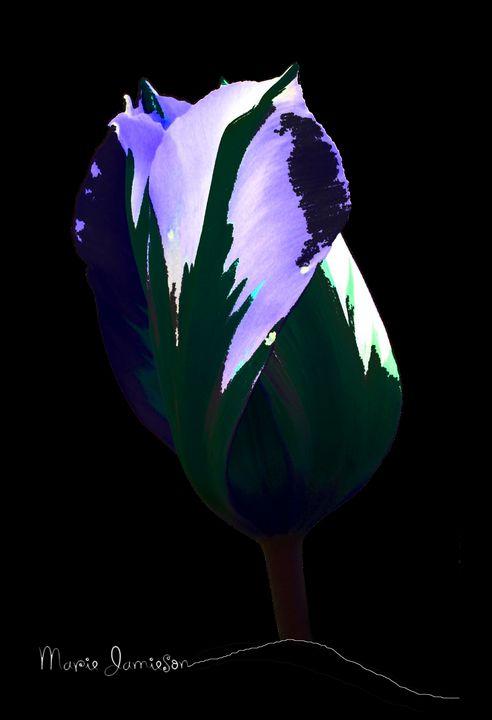 Tulip Imagined - Mjjazz Designs