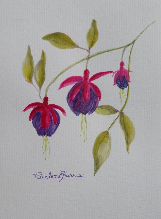 Fuchsia Blooms - Fun With Art