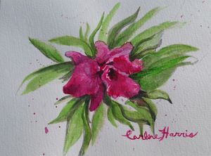 Fuchsia Colored Orchid - Fun With Art
