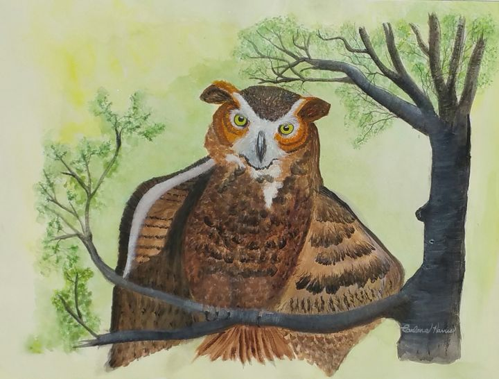 Great Horned Owl Called Hoot - Fun With Art