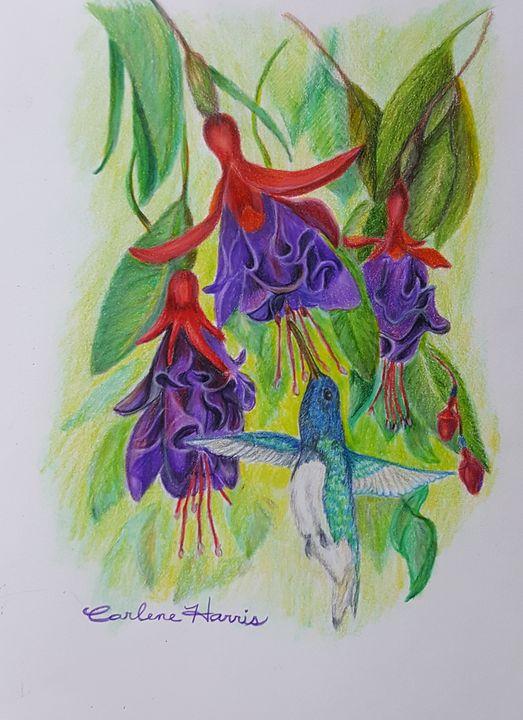 The Hummingbird In The Fuchsia - Fun With Art