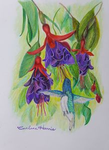 The Hummingbird In The Fuchsia
