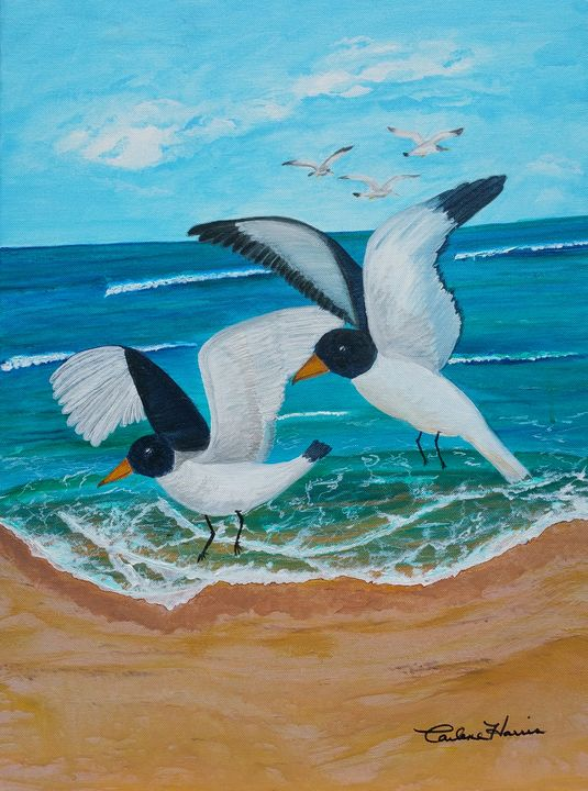 Black-headed Seagulls - Fun With Art