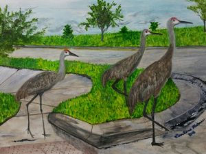 The Sandhill Crane Family Of Wyndham