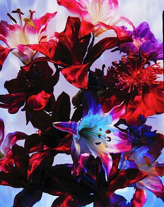 Wild Flower Series 5 - andrzej pluta