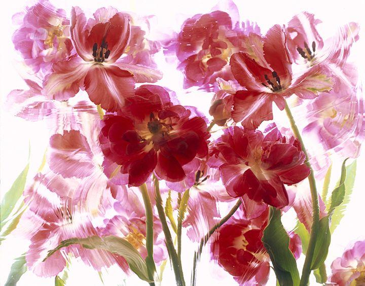 Fleur 2 - andrzej pluta