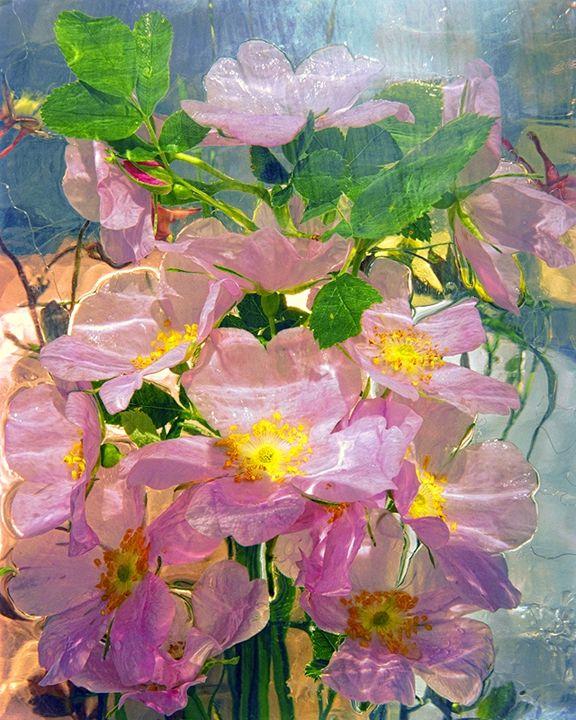 Wild Flowers Series - andrzej pluta