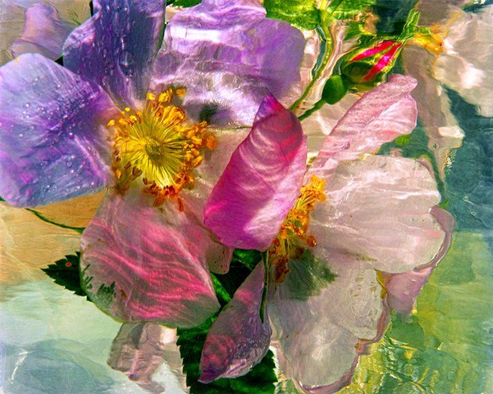 Wild Flower Ice Series 6 - andrzej pluta