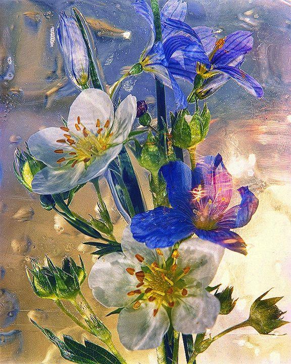 Wild Flower Series - andrzej pluta