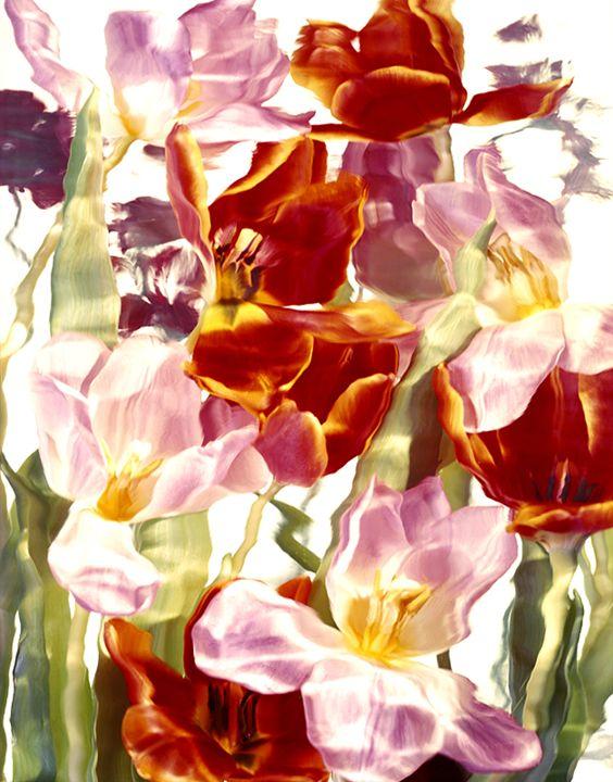 Wild Flower Ice Series 1 - andrzej pluta